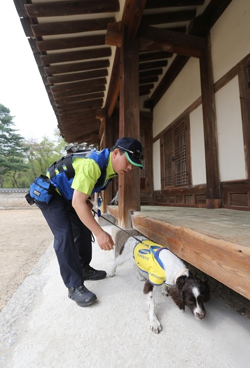 Termite sniffer dogs will be dispatched alongside pest controllers and researchers to local attractions such as Paldalmun Gate, Hwaseomun Gate, and Yeonmudae Post to keep away harmful insects. (Image: Everland)