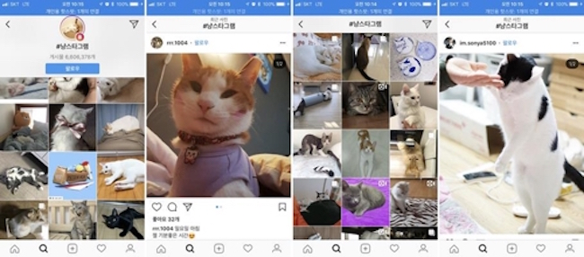 Compared to 2013, when only 6.2 percent of all social networking site pet related posts were from Instagram, by last year Instagram took the cake with 96.1 percent of all posts. (Image: Instagram Screenshot)
