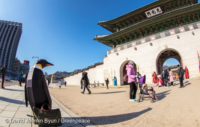Model penguins have appeared in landmarks around Seoul as part of Greenpeace's efforts to raise awareness of climate change and overfishing, which have put animals at the South Pole in danger.  (Image: Greenpeace)