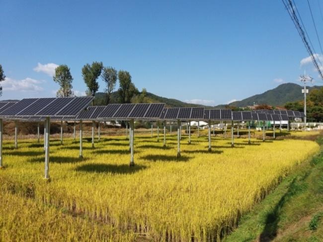 New Technology Brings Together Farming, Solar Energy Generation