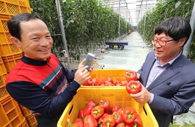 Consumption, Exports of Bell Peppers Increasing