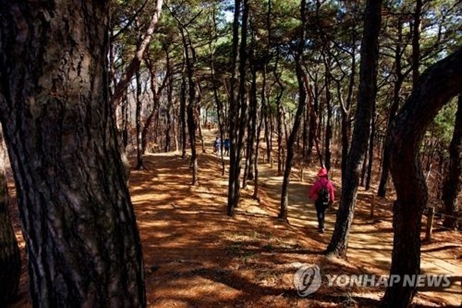 The Ministry of Agriculture is also planning to ramp up promotional activities to encourage more businesses to participate in its greenhouse gas reduction projects. (Image: Yonhap)