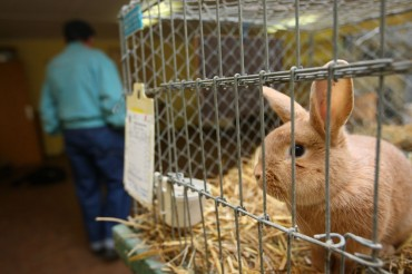 South Korea Under Pressure to Regulate Animal Testing