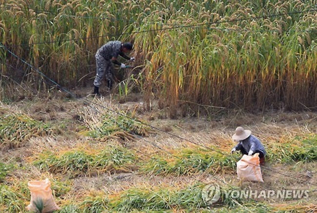 Households engaging in the farming business totaled 1.04 million last year, down 2.5 percent from 1.07 million tallied a year ago, according to the data compiled by Statistics Korea. (Image: Yonhap)