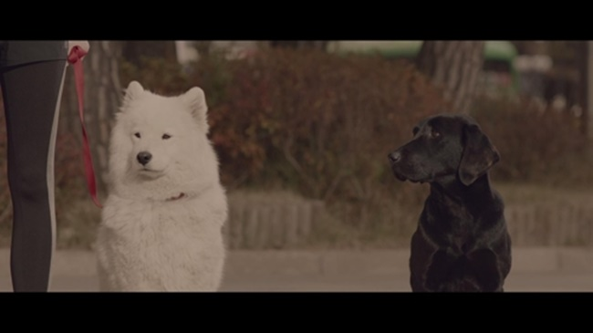 The four-and-a-half-minute long video produced by both CARE and INNOCEAN Worldwide sheds light on discrimination based on the color of dogs in South Korea, with a short story told from the perspective of a black dog. (Image: Innocean)