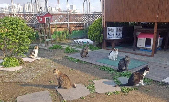 Located on the rooftop of one of the Gangdong District Office buildings, the feral cat shelter is currently home to 15 stray cats that were found on the street and adopted by the district office. (Image: Yonhap)