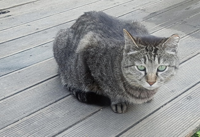 An animal shelter accommodating stray cats is under threat amid growing calls from NIMBYs to relocate the facility. (Image: Yonhap)