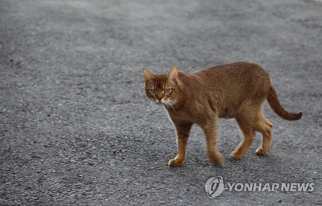 The South Korean capital has announced plans to test hundreds of abandoned animals in the city for infections. (Image: Yonhap)