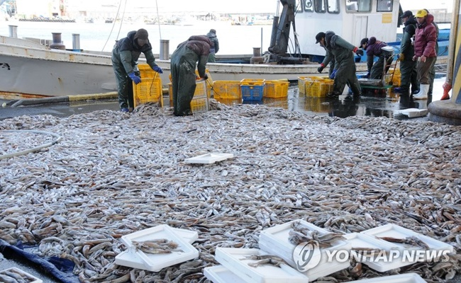 Squid is even being taken off the menu at some seafood restaurants, as retail prices of the seafood have surpassed 4,000 won for the first time last year since 2007, according to the Korea Agro-Fisheries & Food Trade Corporation. (Image: Yonhap)