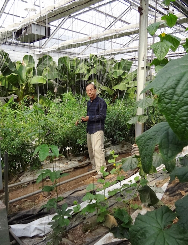 Speaking at his Hadong farm on Sunday, Ha said his banana crop will go on sale soon. (Image: Yonhap)