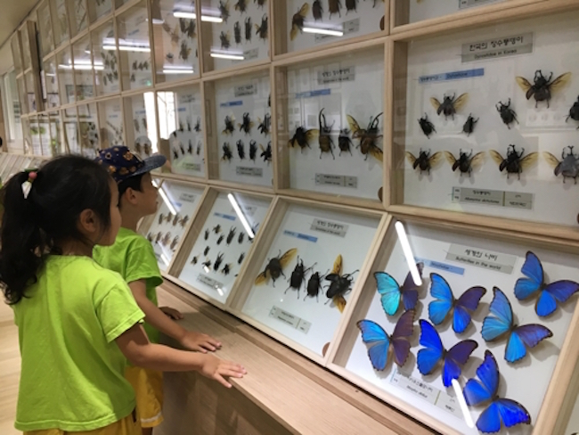 Over 200km away by car, South Korea's largest city is looking to nurture more insect experts. (Image: Seoul)