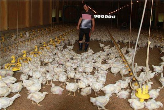 Unmanned Chicken Farms in the Works