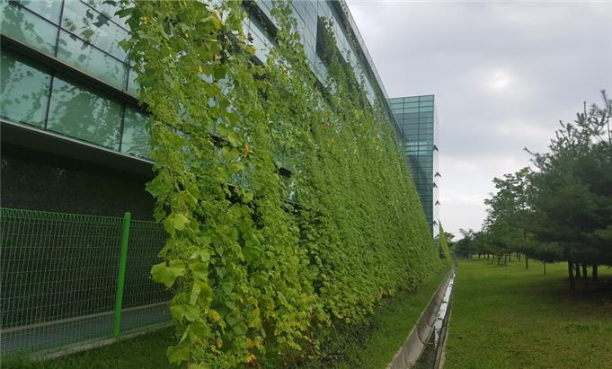 Siheung Unveils Green Curtain Project
