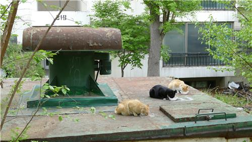 Stray Cats Politicized Ahead of Elections