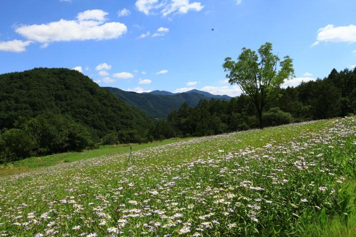 (image: Baekdudaegan National Arboretum)