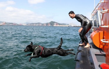 Seafaring Pooch Set to Become Korea's First Maritime Rescue Dog