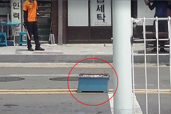 Bees Wreak Havoc on Sejong City Street