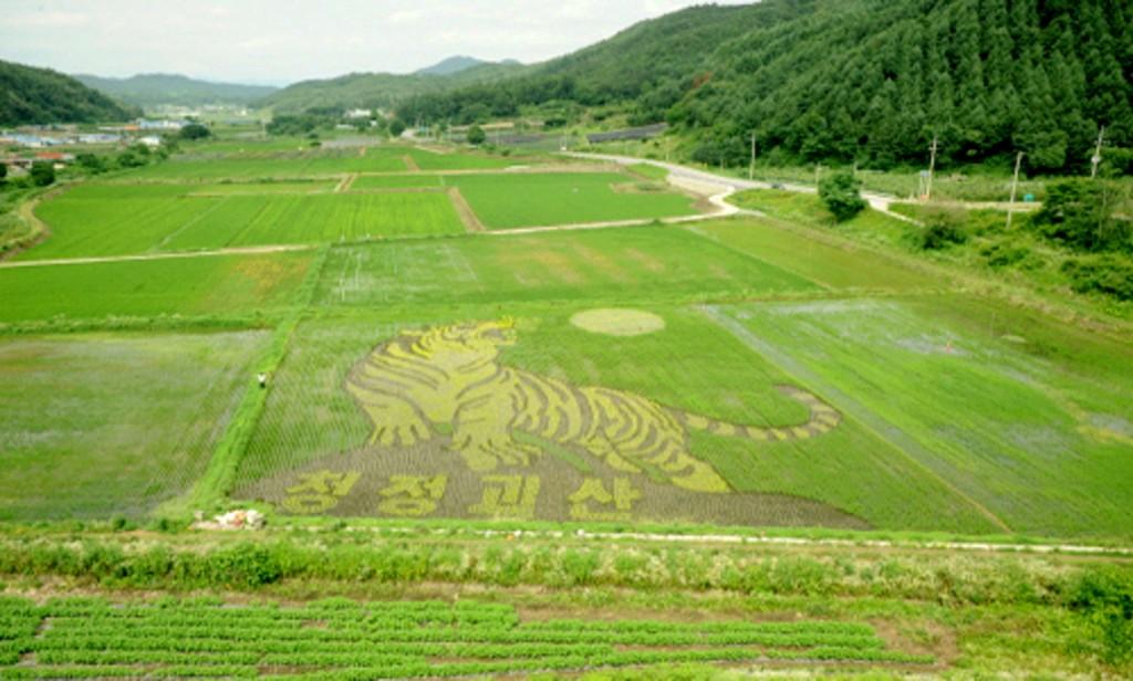 rice paddy-03