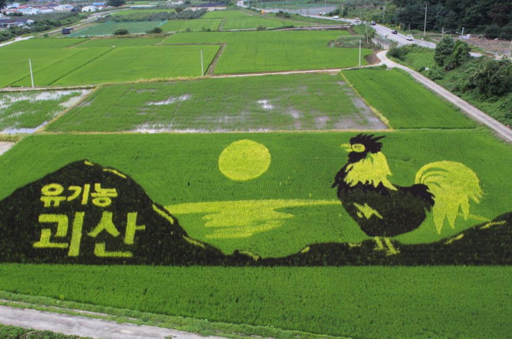 rice paddy artwork-02