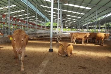 Heat Wave Kills 420,000 Livestock Animals