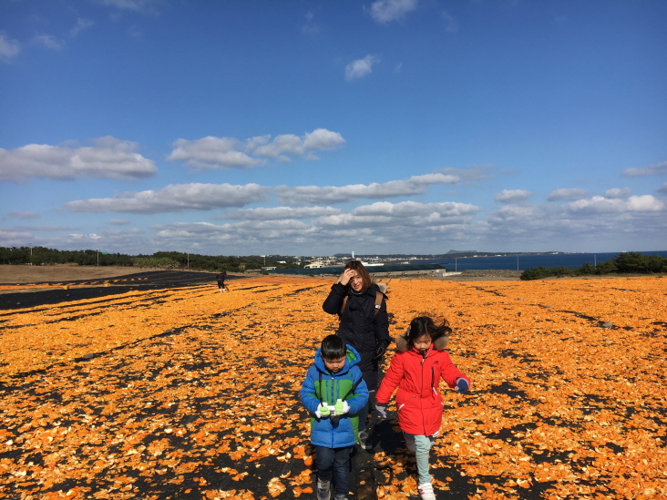 Lee Na-hyeon and her two children walking in a field of tangerine peels laid out to dry at the Sincheon Ranch, Seogwipo, on Jeju Island during their monthlong stay in January 2017. (image: Lee Na-hyeon)