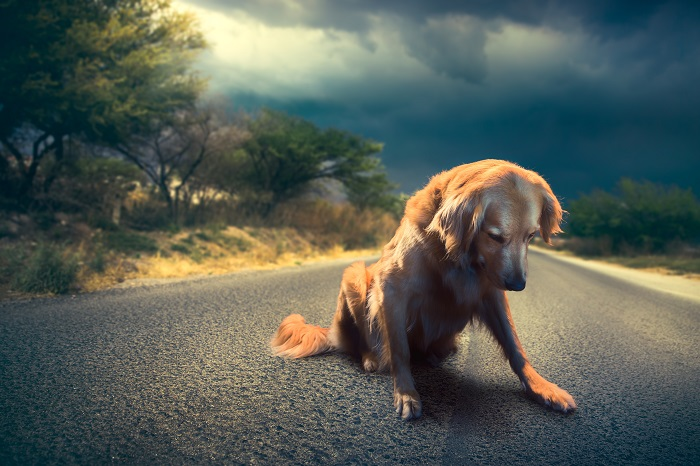 As more South Koreans are abandoning their pets at vacation spots, an increasing number of pets are being found near tourist attractions or on country roads. During the summer holiday season, the number of pets abandoned typically doubles. (Image credit: Kobiz Media/Korea Bizwire)
