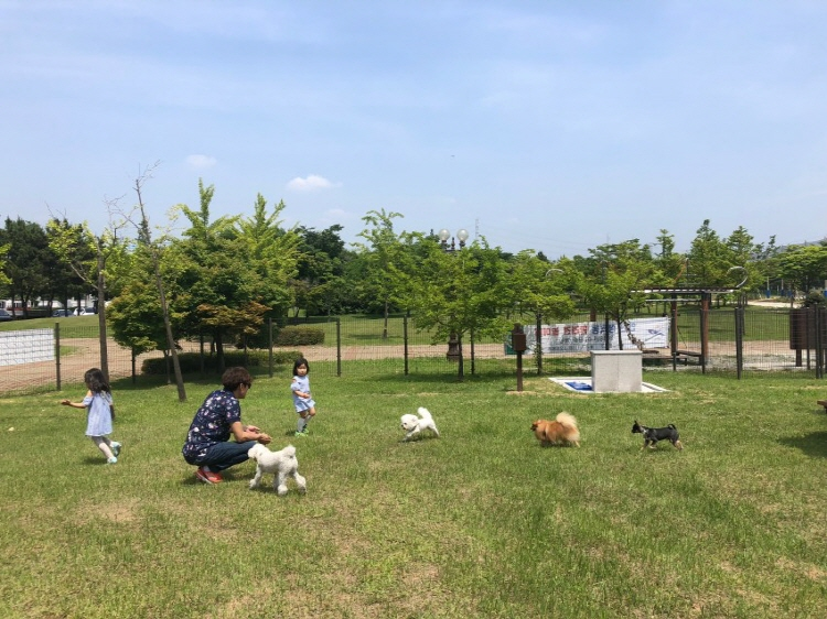 Ansan Seonggok Dog Playground in Ansan, Gyeonggi Province. (image: Ansan City Office)