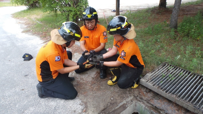 Four Newborn Kittens Rescued from Underground Drain