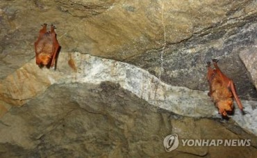 """Copper-Winged Bat Village"" Coming to North Chungcheong Province"