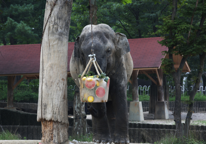 Asian Elephant at Seoul Grand Park Dies Suddenly