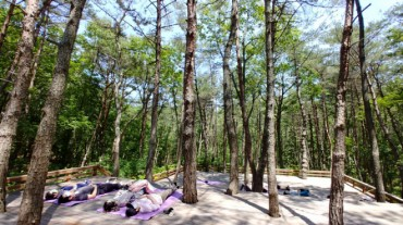 225,000 Trees to be Planted in Busan's Saha-gu to Fight Fine Dust
