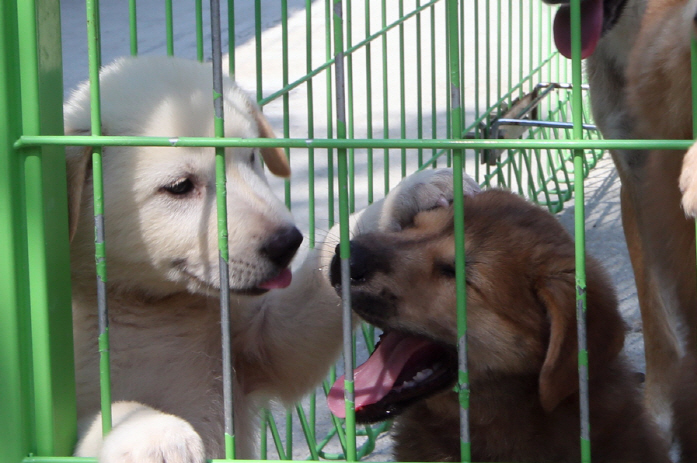 Jeju Island Supports Neutering Program for Abandoned Dogs