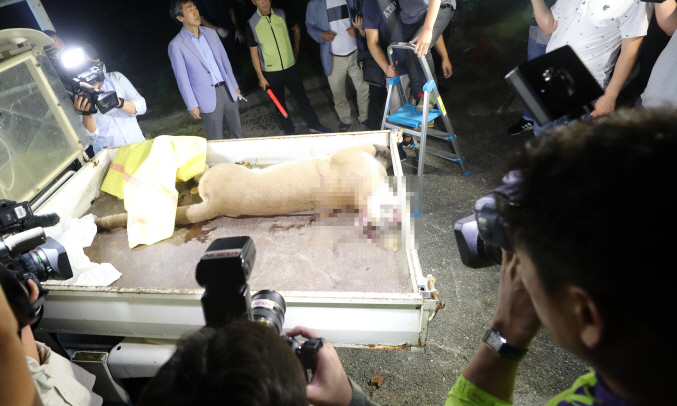 The animal rights group said that the death of the puma could have been avoided if the concentration of the anesthetic dosage had been properly controlled. (image: Yonhap)