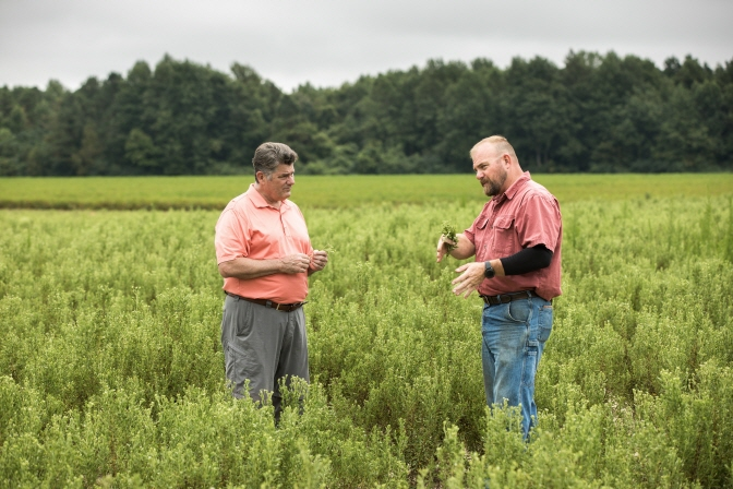PureCircle Chief Supply Chain Officer Gary Juncosa (left) speaking with North Carolina stevia farmer Jeff Tyson about the 2018 Starleaf stevia crop. (image: PureCircle)