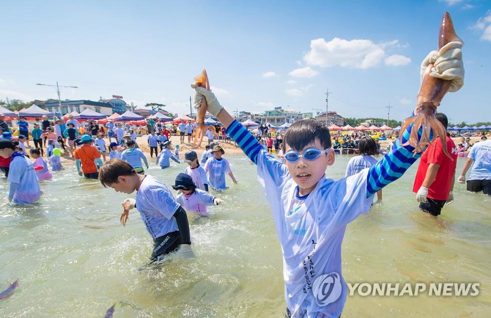 squid festival