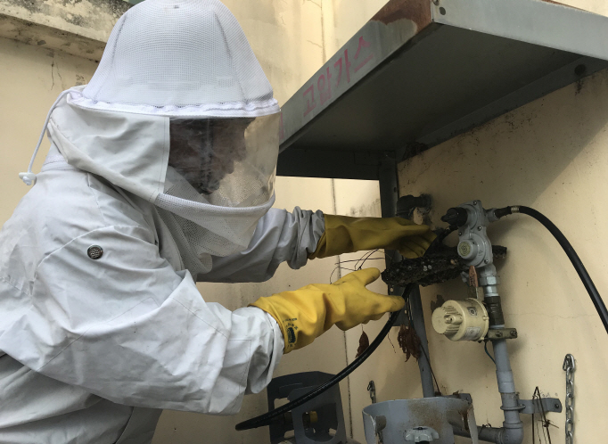 The National Fire Agency said that only some 80,000 cases concerning bee hives were reported during August and September, a 13 percent drop (12,955 cases) from last year. (image: Gwangju Nambu Fire Station)