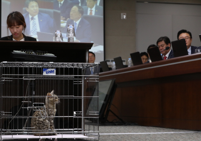 "Netizens who heard of news of Rep. Kim Jin-tae's inclusion of the cat at the hearings said they ""felt sorry for the Bengal."" (image: Yonhap)"