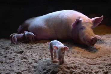 "Piglet's ""First Step"" Clinches Top Prize at Animal Photo Contest"