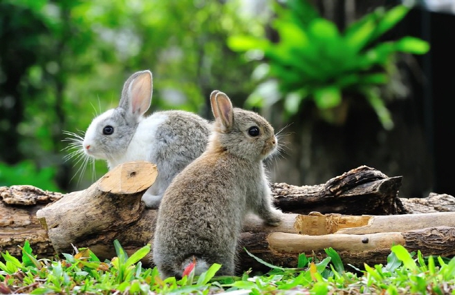 Seorae Village's Montmartre Park Struggles with Rabbit Infestation