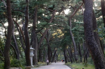 "Grove of ""Dancing"" Pine Trees Named Korea's Top Forest"