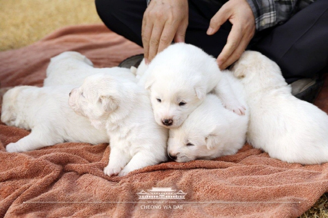Blue House Releases Photos of Puppies from Dogs Gifted by N. Korea