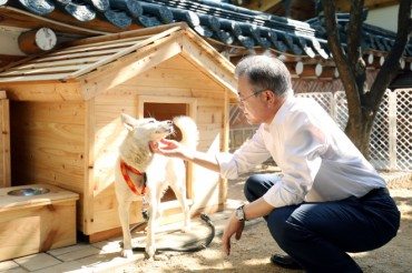 Pungsan Dog Gifted by N.K. Leader to Moon Gives Birth to Six Puppies