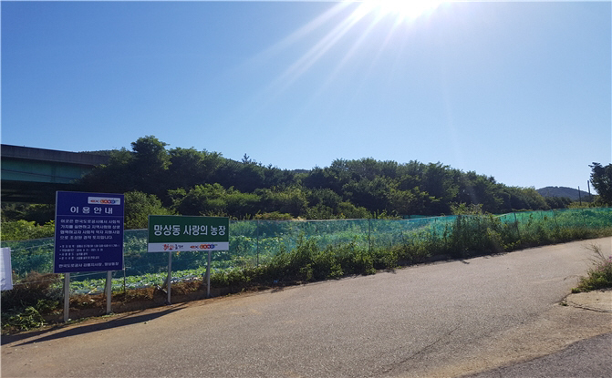 The communal farmland, which spans an area of 1,798 square meters, was created in August, and various vegetables including cabbage are currently being grown. (image: Korea Expressway Corp.'s Gangwon Regional Headquarters)