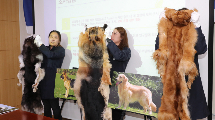 Animal activists held a press conference yesterday at the National Assembly and stated that fur products made from cat hide are probably coming from China as current domestic laws prohibit slaughtering of cats. (image: Yonhap)