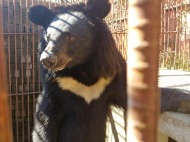 Green Korea United Kicks Off Black Bear Rescue Mission