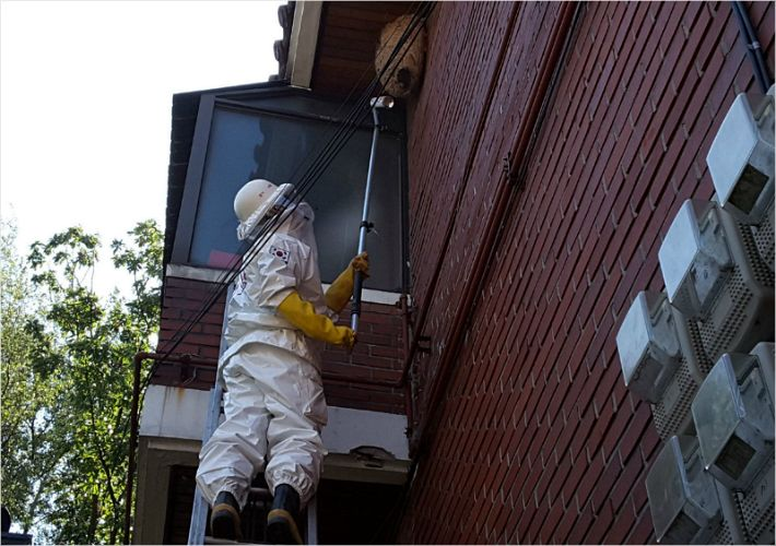 A rescuer removing a hornet nest on the wall of a house. (image: Gyeonggi Disaster and Safety Headquarters)