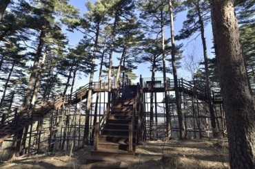 Korea Forest Service Opens 100-year-old Forest to the Public