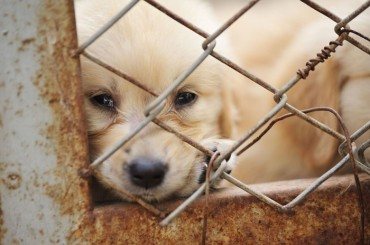 Private Animal Protection Agencies Housing 15,000 Abandoned Animals