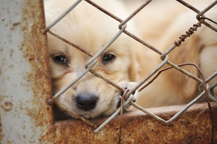 According to a report released by the Busan Metropolitan Government on Tuesday, there were 4,377 dogs and 3,072 cats abandoned last year. (image: Korea Bizwire)