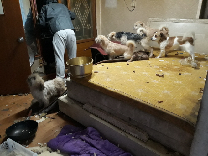 Some of the remaining pets wandered around the house searching for scraps of food, and others managed to escape. (image: Daejeon Jung District Office)